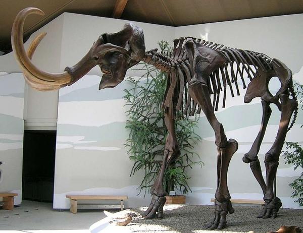 Наследие мамонтов (wikipedia.org)