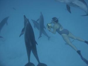 Общение с дельфинами (phys.org)