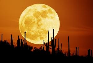 Луна (nasa.gov)
